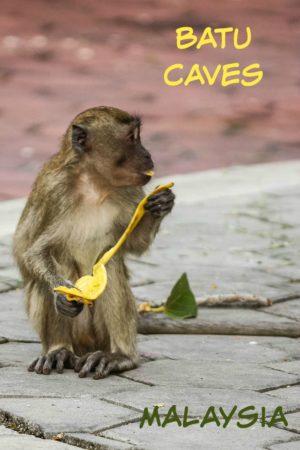 Long-tailed macaques (wild monkeys) at Batu Caves outside Kuala Lumpur in Malaysia.