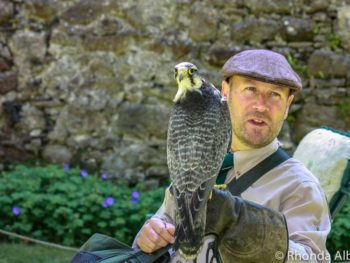 Falconry at Dunrobin Castle in the Scottish Highlands