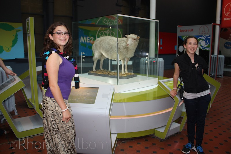 Dolly, the first cloned adult sheep preserved in the National Museum of Scotland in Edinburgh