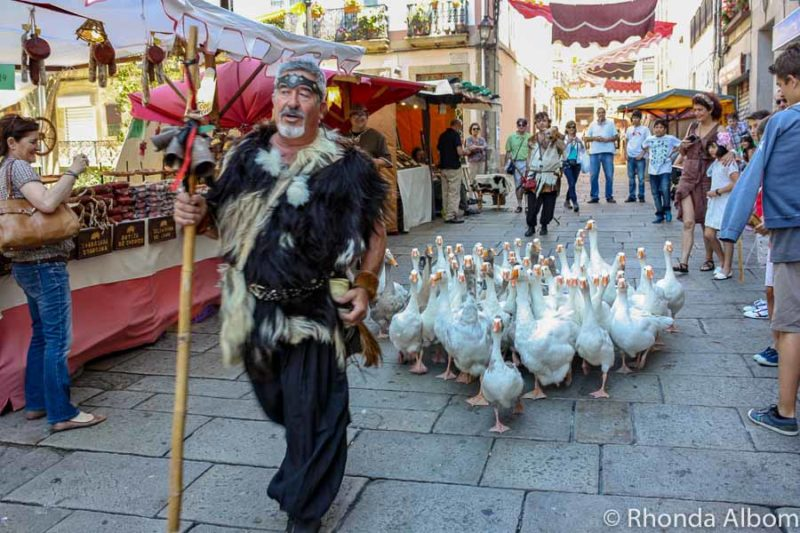 Geese being lead at at a medieval fair in Sain