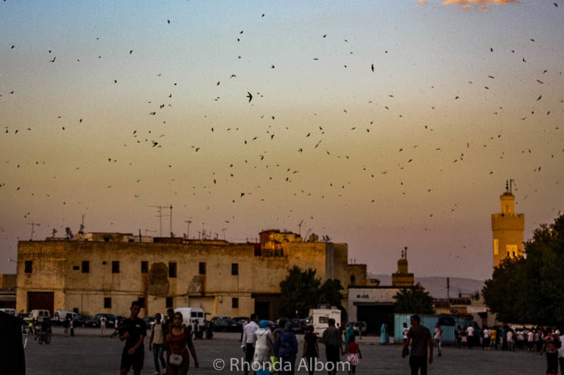 Every evening at dusk 100s of birds took flight from this section of the Fes Medina in Morocco.