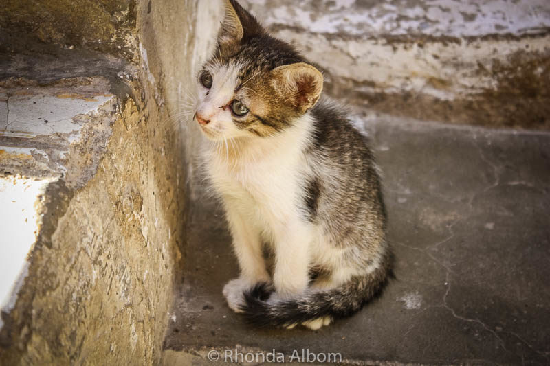 A stray cat in the Fes Morocco