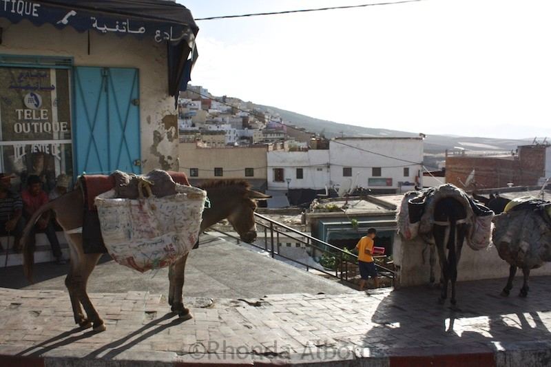 Donkeys outside of the souk in Moulay Idriss Morocco