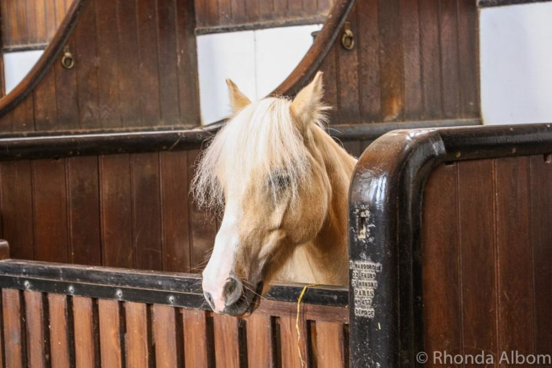 Inside the Great Stables, home to the Chantilly living horse museum