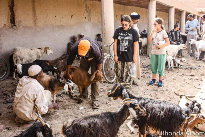 An animal market in Rissani Morocco