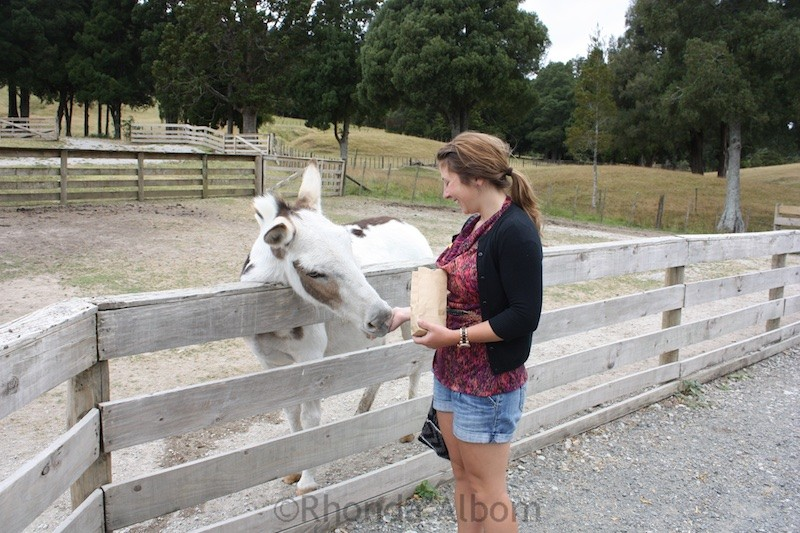 Feeding a pony at Sheep World in New Zealand