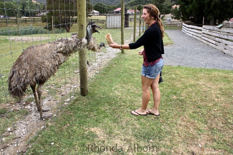 Feeding an Emu at Sheep World in New Zealand