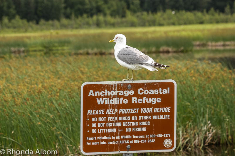 Bird sits on the sign for the Anchorage Coastal Wildlife Refuge in Alaska