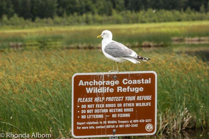 Anchorage Coastal Wildlife Refuge, in Anchorage Alaska