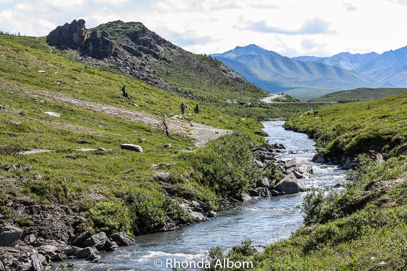 View of the Savage River Trail Denali National Park, Alaska