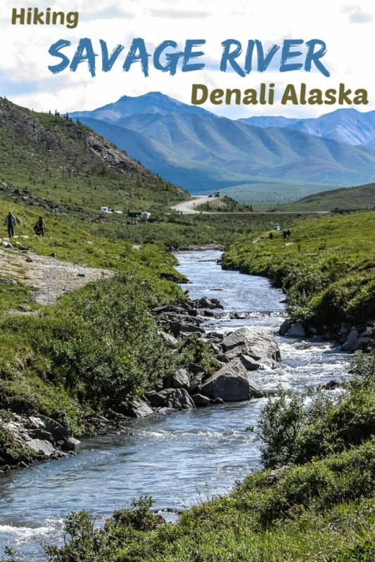This is one of several photos as we hiked the 3.5 km Savage River Trail in Denali National Park, Alaska