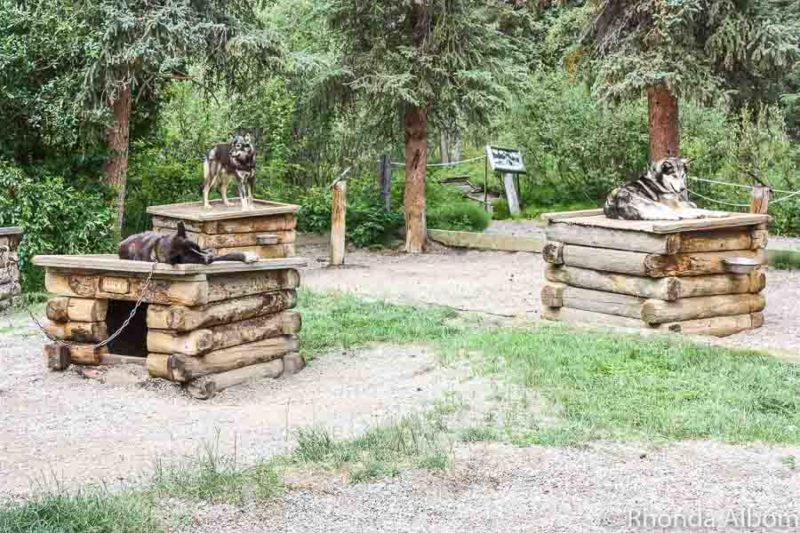 Dog sled exhibit at Denali, National Park, Alaska