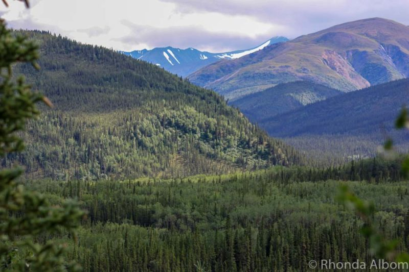 View inside Denali National Park Alaska