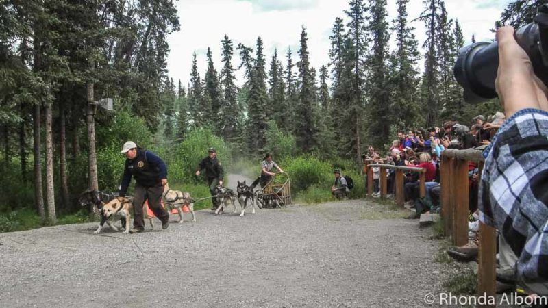 Dog sledding Alaska - photo from Denali national park and preserve
