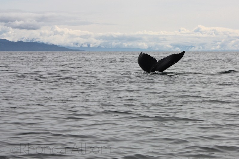 Whales in Alaska seen in Icy Strait Point.