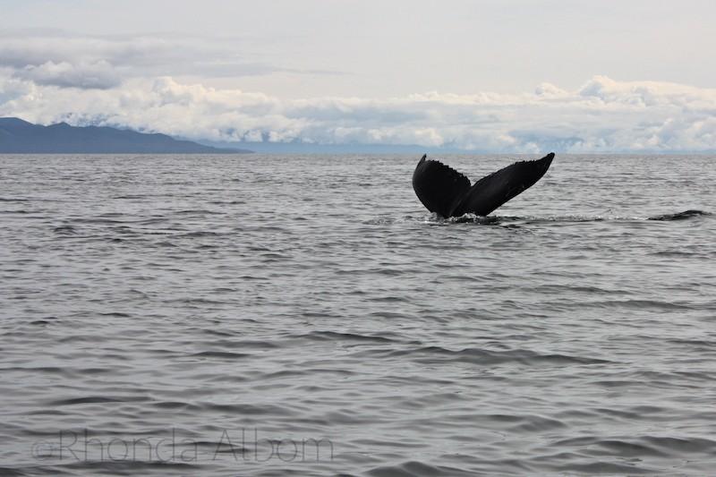 Whale Watching in Hoonah Alaska