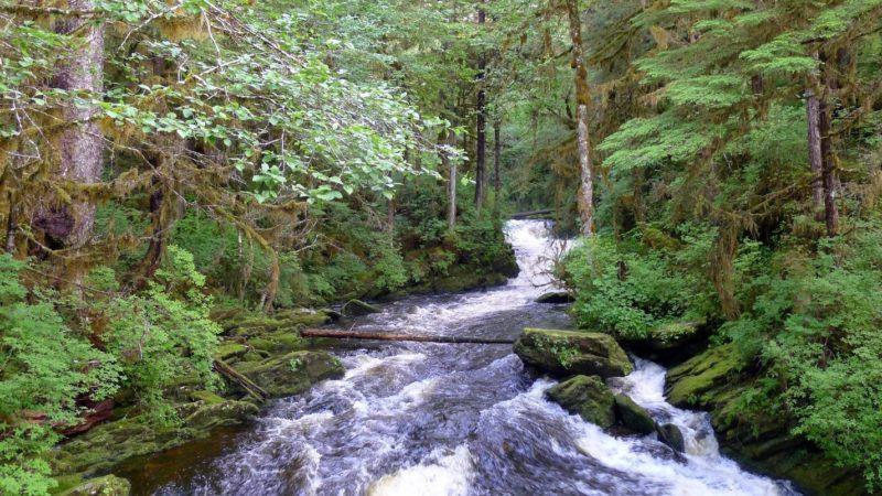 Creek in Ketchikan region in Alaska