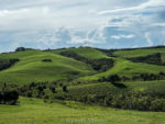 Shakespear Park, Auckland New Zealand