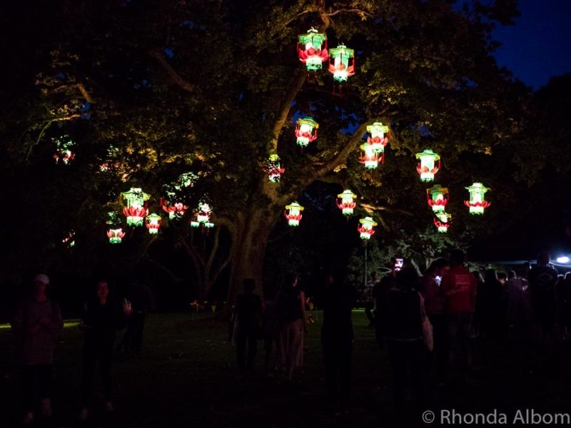 Chinese New Year Lanterns in the trees at Auckland Lantern Festival, Auckland New Zealand