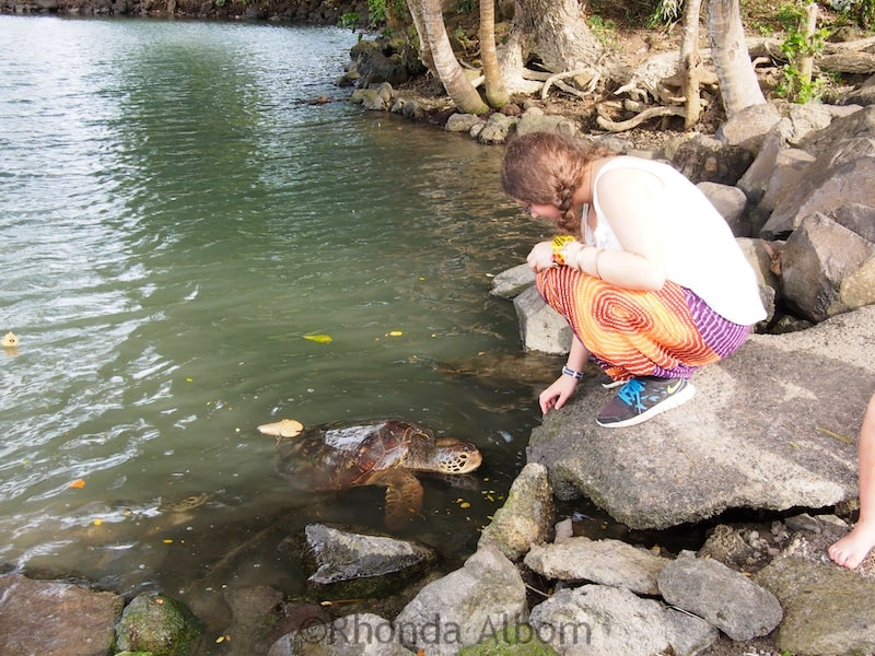Malua Turtle Feeding Pool on the north side of Upolu, Samoa