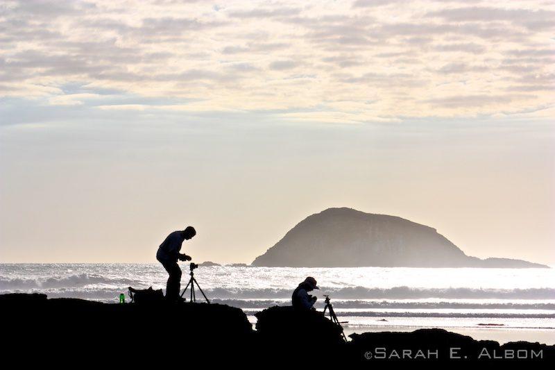 Silhouettes on Muriwai beach, New Zealand. Photo copyright ©Sarah Albom 2014