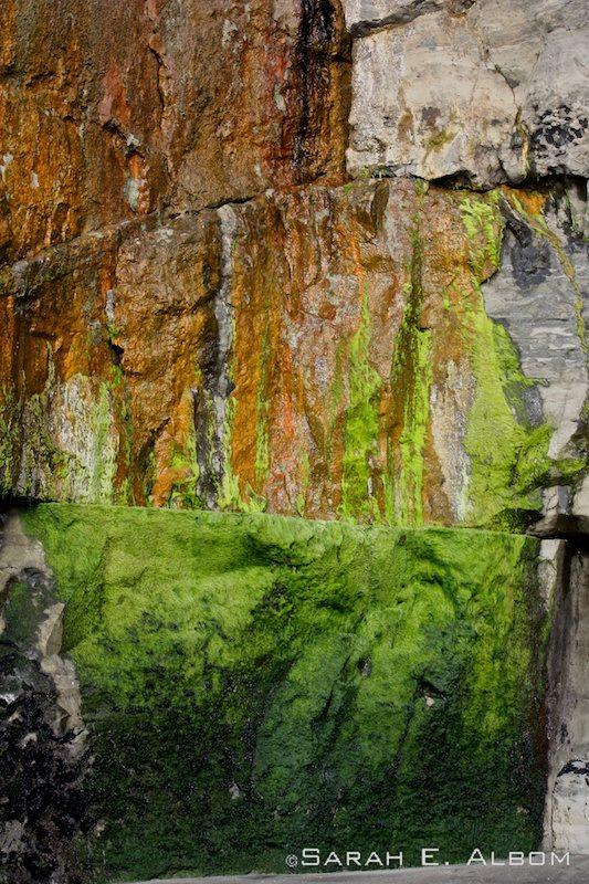 Wet algae on the rocks at Muriwai beach, New Zealand. Photo copyright ©Sarah Albom 2014