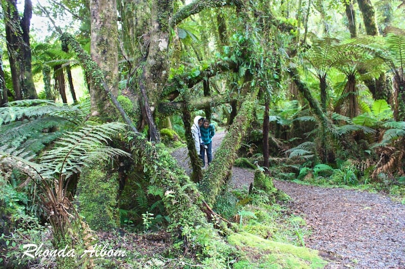Hiking through the subtropical rainforest to Monro Beach