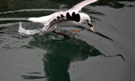 Seagull stealing a bit of bread in the Marina
