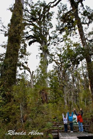 Kahikatea tree seen along the Ship Creek Walk, New Zealand