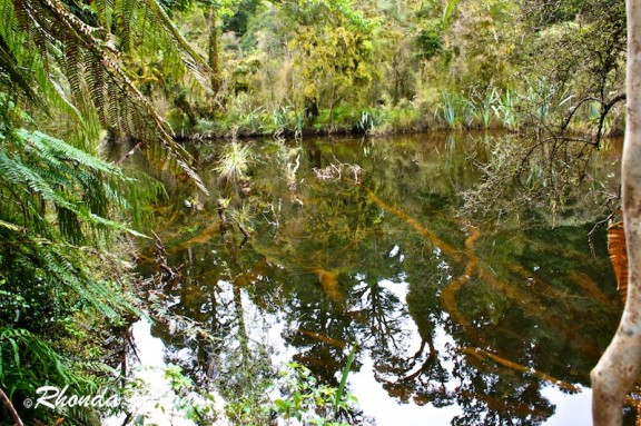 Ship Creek swamp forest near Haast in New Zealand