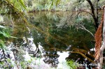 Kahikatea Swamp Forest Walk Along Ship Creek in New Zealand