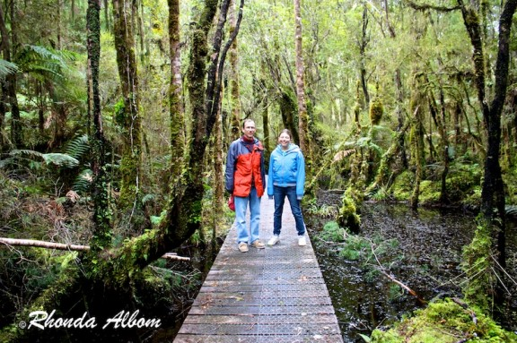 Boardwalk at Ship Creek swamp forest in New Zealand