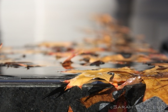 Leaves in the pool outside the Auckland Art Museum - rainy day photos