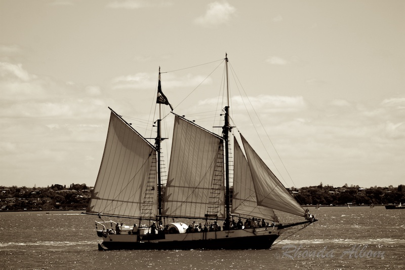 sail away, tall ships sailing in Auckland harbour, New Zealand