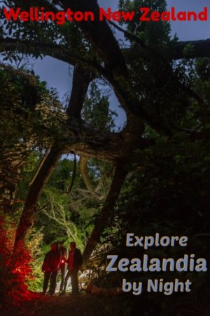 Zealandia Ecosanctuary night tour is a chance to see kiwi birds, eels, glow worms and other nocturnal creatures in Wellington New Zealand