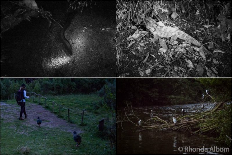 Animals seen at Zealandia by night in Wellington New Zealand