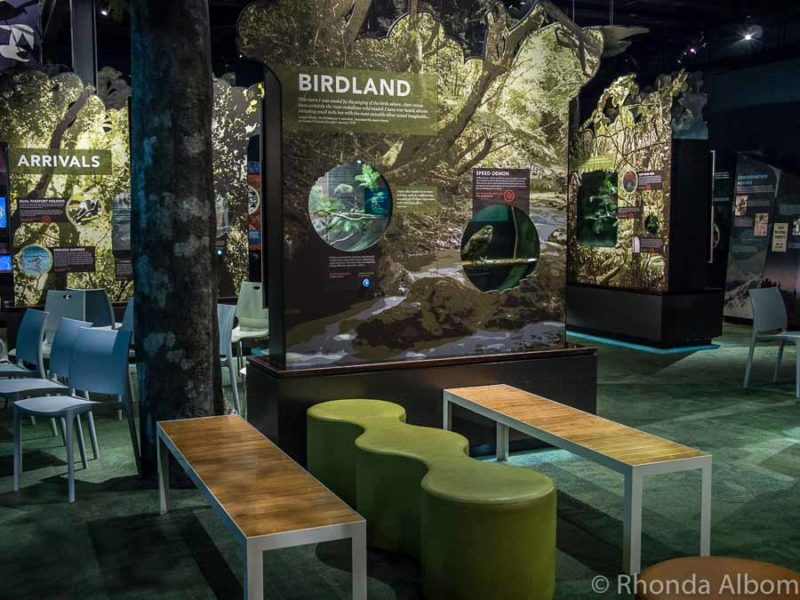 Inside the educational exhibition hall at Zealandia, Wellington New Zealand