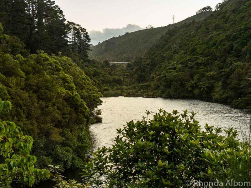 Zealandia night tour in Wellington New Zealand