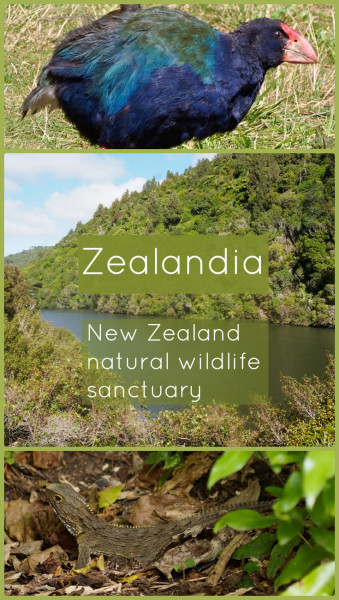 Zealandia - New Zealand Wildlife Sanctuary the way nature intended. For more information visit Albom Adventures