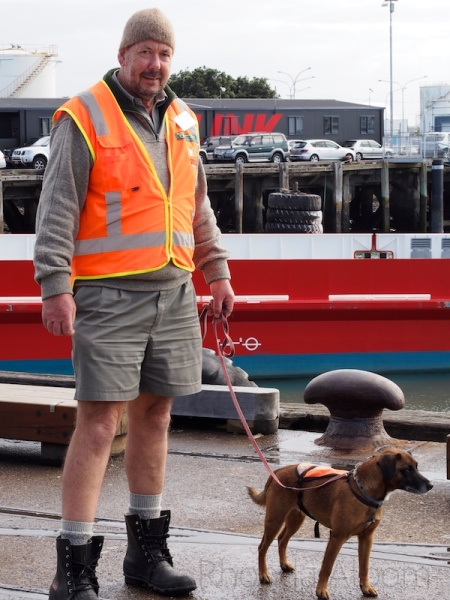 Department of Conservation worker and dog in Auckland