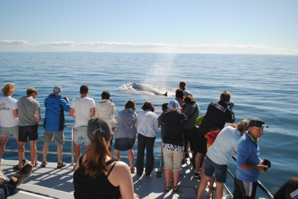 Photographing a whale from the AWADS Boat in New Zealand