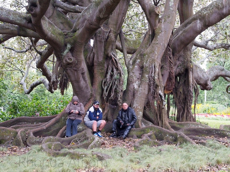 People sitting on the tree roots in Albert Park, Auckland, New Zealand