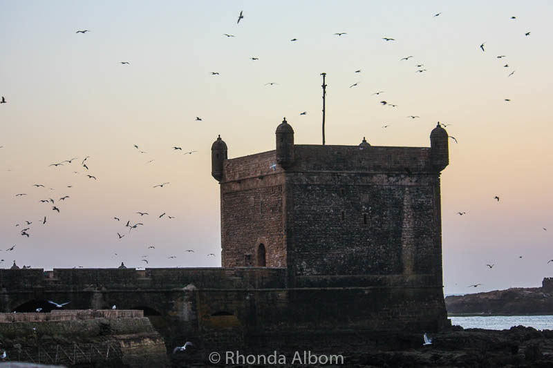 Birds fly around the old guard tower in Essaouira Morocco