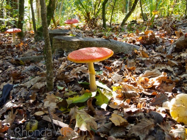 Several Colorful Mushrooms in Jaggers Bush, Auckland New Zealand