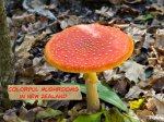 Photos: Colorful Mushrooms Seen While Hiking in Auckland