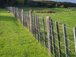Paddock fence in Shakespear Park, Auckland New Zealand