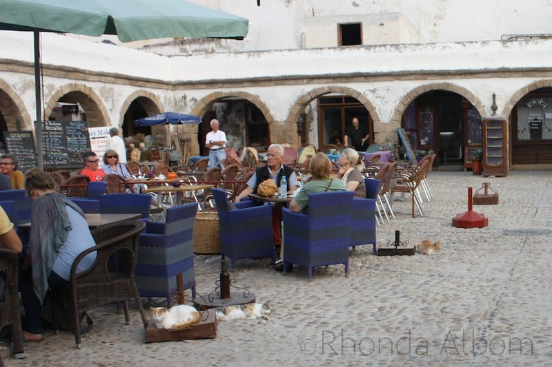 Cats are everywhere even this restaurant in the Medina of Essaouira Morocco