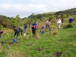 Planting Day Replenishes the Native Bush to Auckland Parks
