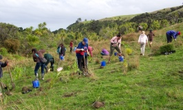 Planting Day at Shakespear Park in Auckland New Zealand