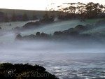 Eerie morning fog over Shakespear park in Auckland New Zealand
